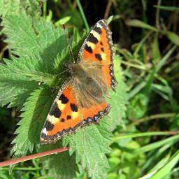 Rhodos butterfly valley